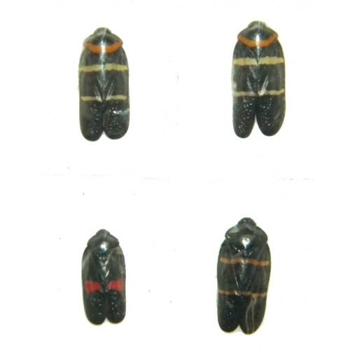 Cercopidae mix  SET OF 4