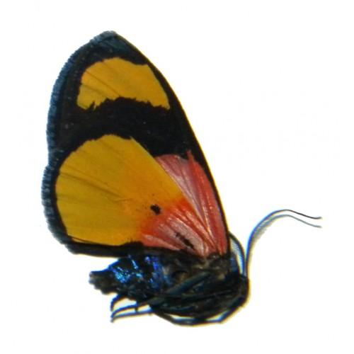 Eubordeta eichhorni