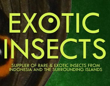 Exotic-Insects