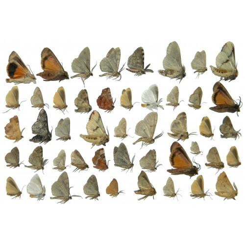 Moth mix 33  Set of 110