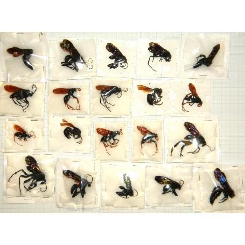 Hymenoptera mix 08  Set of 20