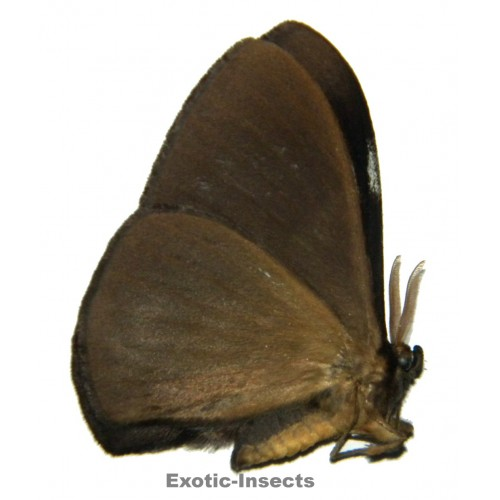Misc. moth sp.73